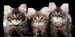 Kattenhotel Lummen Logo